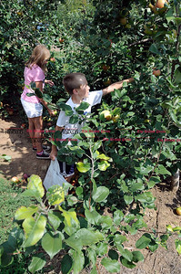 9/1/2012 Mike Orazzi | Staff Haley Parker,10 and her brother Ryan,7, pick pick Macintosh apples on the first day of pick your own apples Rogers Orchards on Long Bottom Road in Southington. *** for a Diane story ***