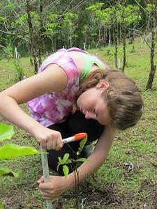 katherine tucker numbering newly planted seedlings
