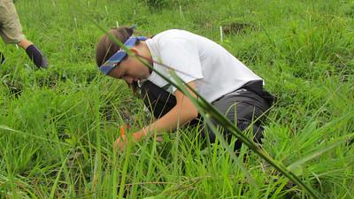 sophie leiter plants a tree seedling