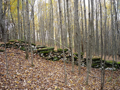 087 stone wall in the woods (reduced)