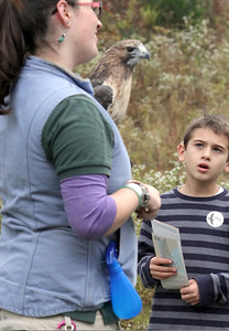 IMG_2830 ethan goudreau of ma looks at red tailed hawk