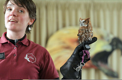 IMG_2773 noella girard with eastern screech owl during lecture