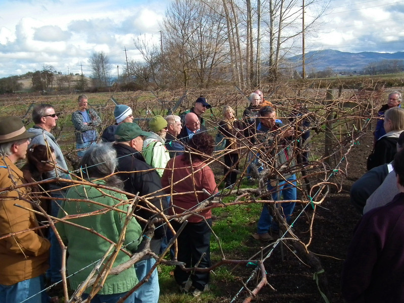 Grape Pruning Demonstration