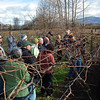 Grape Pruning Demonstration