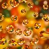 20120119 Jellybean Droplets
