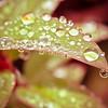 20121008 Rain on a Leaf