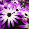 20120328 Orton Flowers
