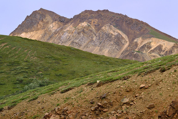 A variety of colors in the Denali National Park landscape.