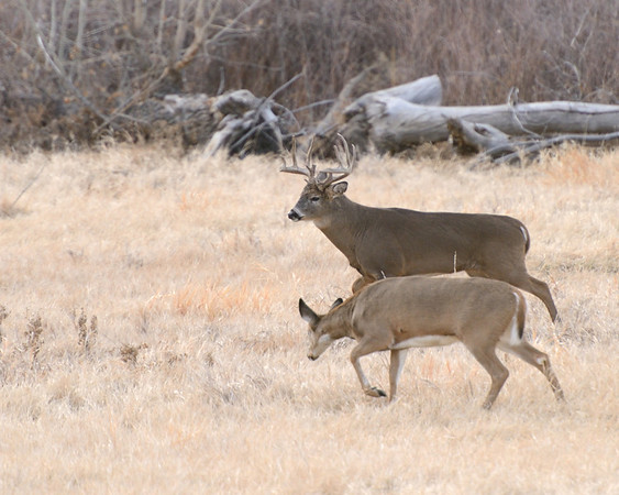 A buck and a doe move on to other grounds.