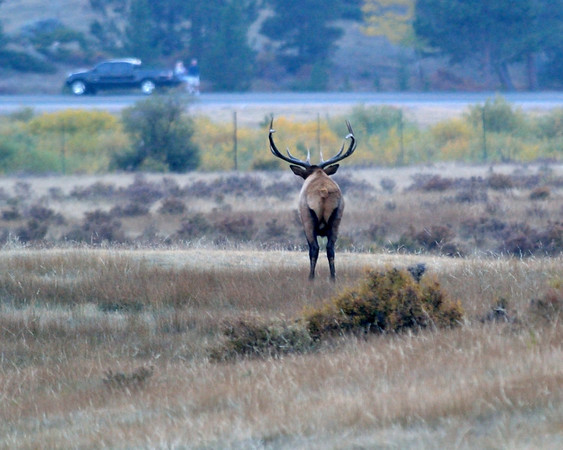 My fall trip to Rocky Mountain National Park to photograph the elk rut and fall colors