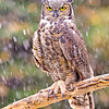 Raptor workshop on an early November 2012 snowy day.  Run by Rob Palmer