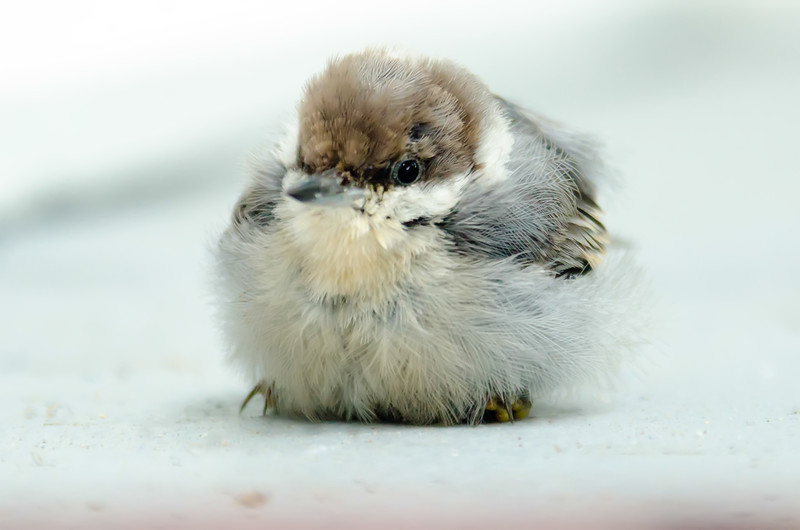 cute little baby bird