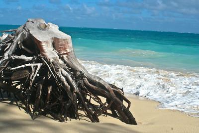 Tropical Stump; Hawaii 2012