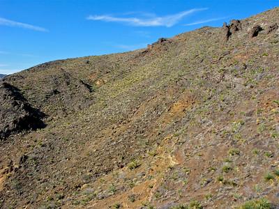 Big Bertha saguaro cove but no big cactus