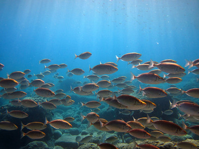 2012 July : Creta Underwater