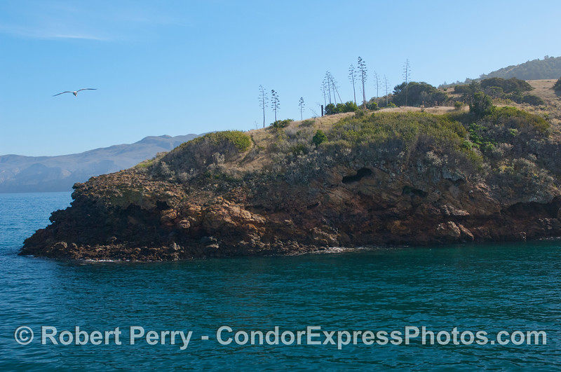 Entrance to Pelican Bay, Santa Cruz Island.