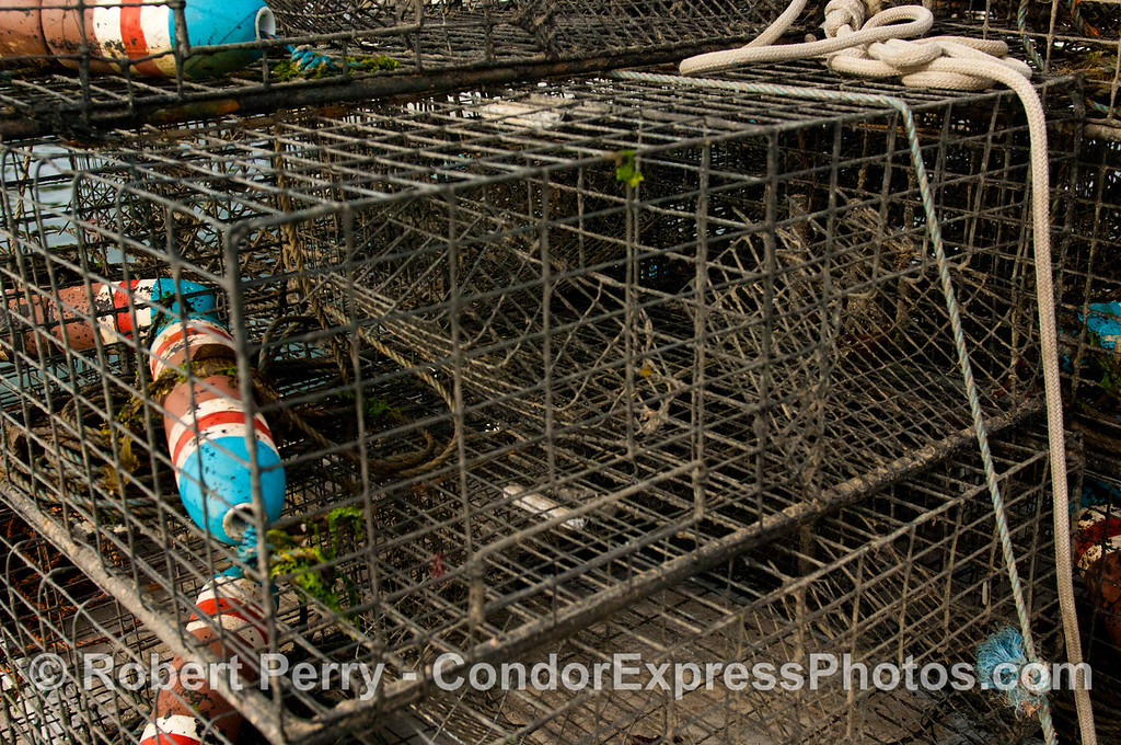 Hector's lobster traps.