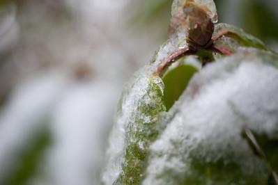 2012-01-19 氷だらけ