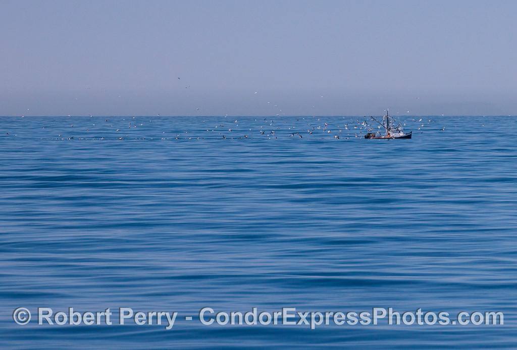 vessel fishing Alamo & birds 2012 03-03 SB Channel-002