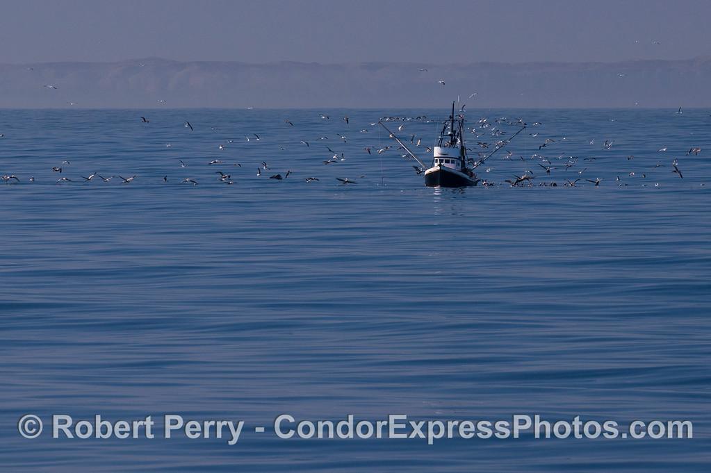 vessel Alamo fishing with birds 2012 03-03 SB Channel-004
