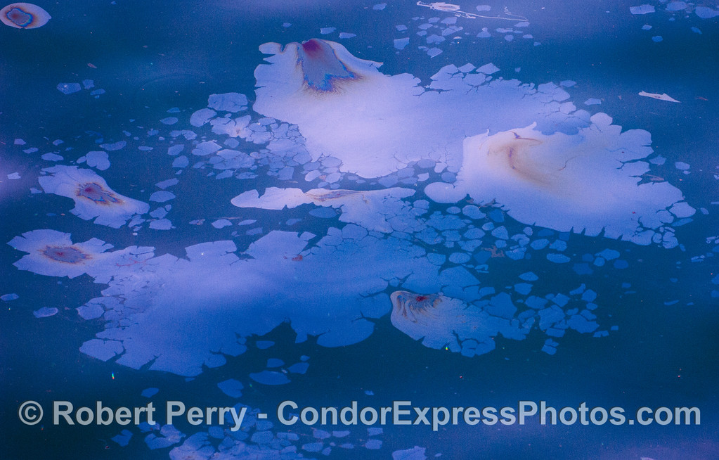 abstract-ocean surface 2012 03-10 SB Channel-a-011