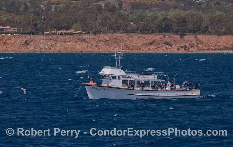 vessel sportfisher Stardust at anchor 2012 04-06 SB Channel-014