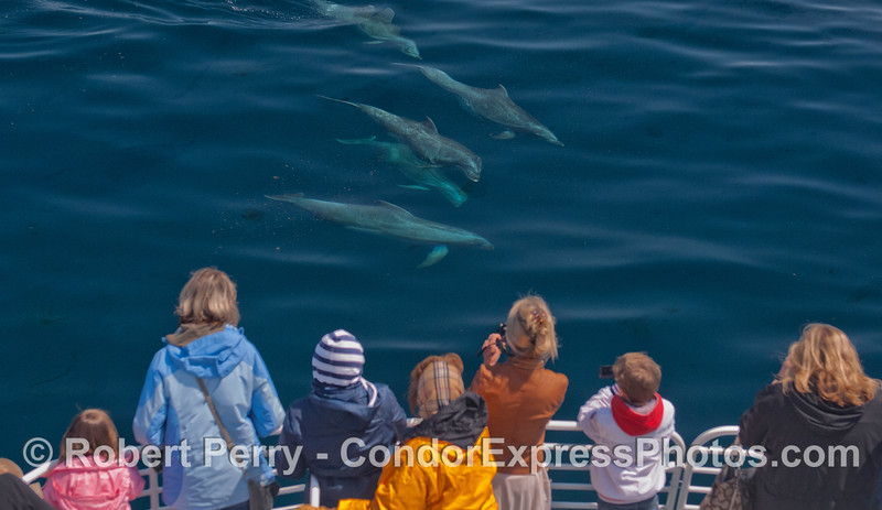 Five bottlenose dolphins pose for the cameras.