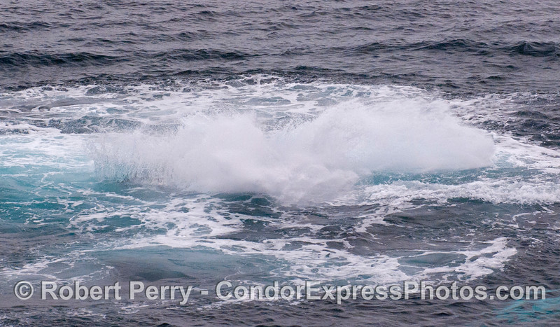 Image 7 of the sequence:  A Humpback Whale throws its tail.  Nothing but foam.