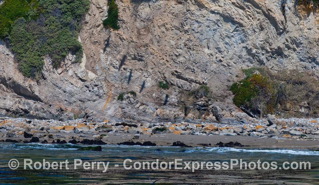 Pelecanus shadows on cliff face 2012 04-15 SB Channel-005
