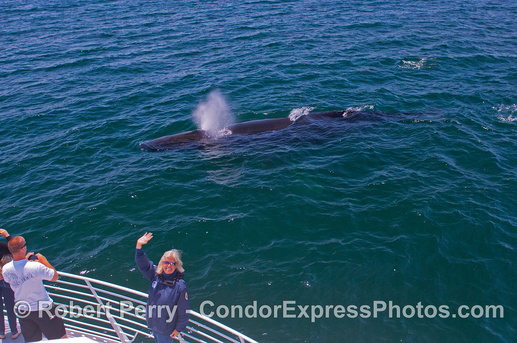 "Naturalist Shirley enjoys one of the great ""fringe benefits"" of her volunteer job:  a close encounter with a friendly Humpback Whale (<em>Megaptera novaeangliae</em>)."