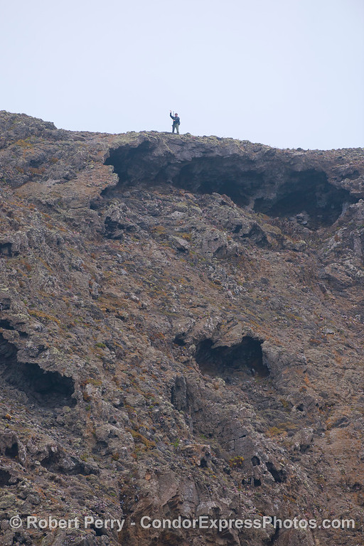 A hiker carrying some kind of survey instrument waves from atop the sea cliffs of west Santa Cruz Island.
