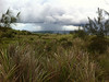 Rain showers over the ocean (more bamboo orchids in the foreground)