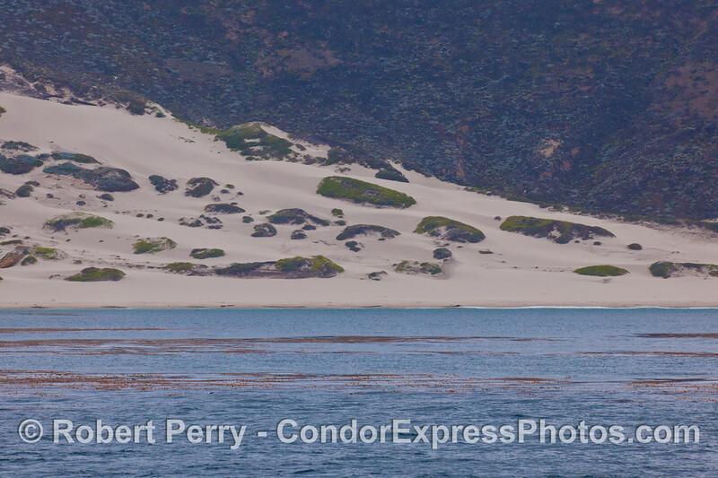 Sand dunes, Cuyler Harbor - San Miguel Island.