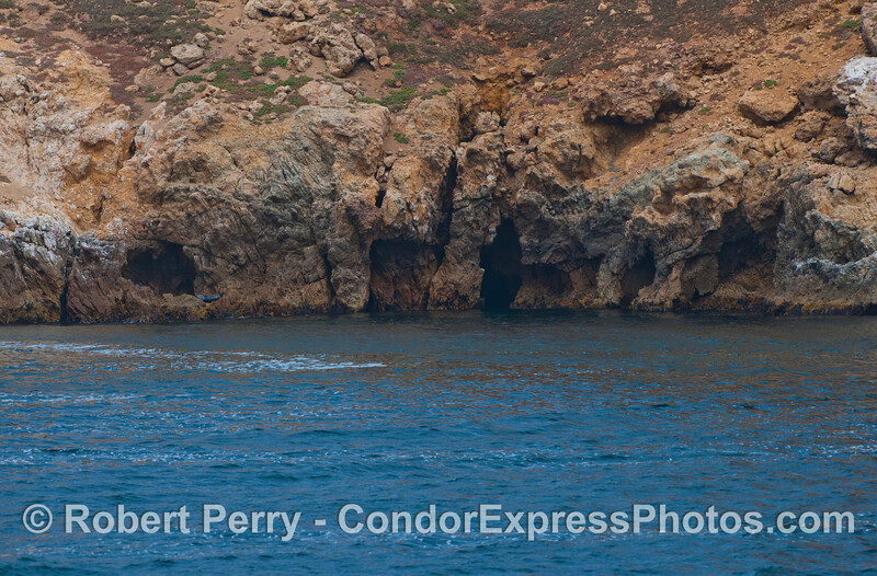 Caves and cracks - Prince Island, San Miguel Island.  A lone Pacific harbor seal (<em>Phoca vitulina</em>) is seen hauled out on the rocks to the left.