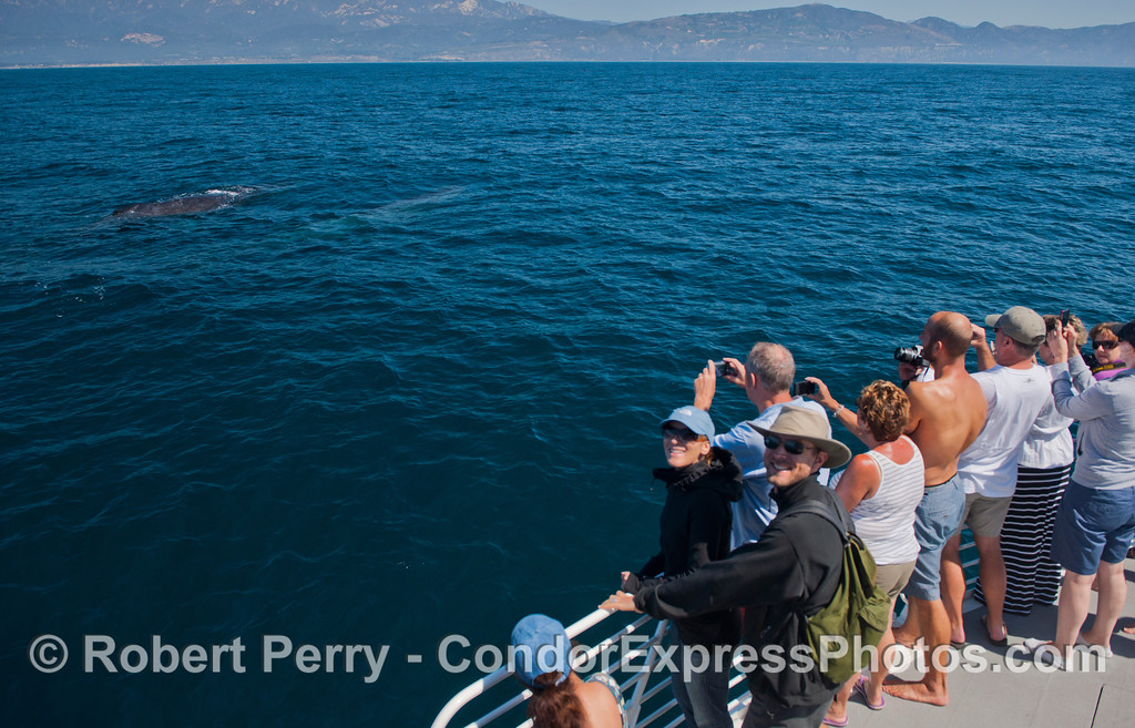 Two humpback whales (<em>Megaptera novaeangliae</em>) and Condor Express people.