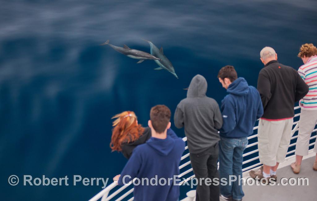 Delphinus capensis 2012 09-26 SB Channel-a-004