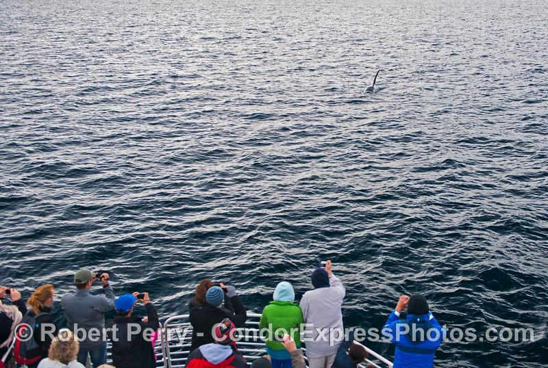 Orcinus orca & passengers 2012 12-22 SB Channel-a-003