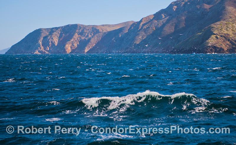 seabirds seacliffs 2012 12-26 SB Channel-c-002