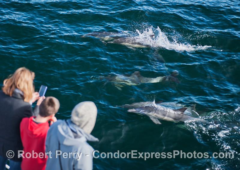 Delphinus capensis & passengers 2012 12-28 SB Channel-a-031