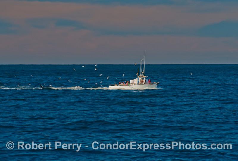 vessel sport fishing Sea Jay Eschrichtius robustus 2012 12-31 SB Channel-001
