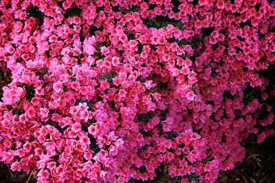Flowers outside of the Elliott House (WGWG Radio Station)