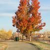 My favorite fall tree