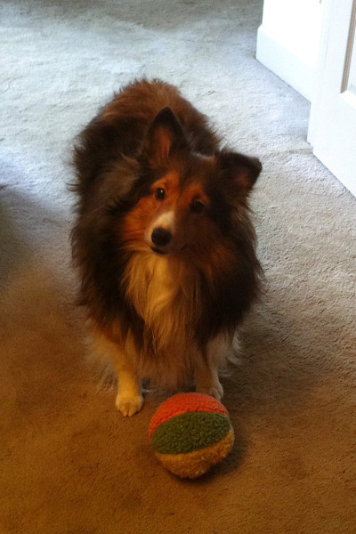 Peggy standing with toy wanting to play