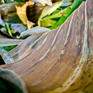 2012_01_28_Yard_shots