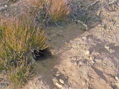Probably a kit fox burrow