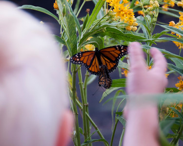 3/25 Avow Hospice Butterfly Release