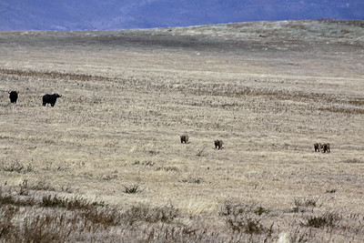 Ngorongoro Crater - stalking