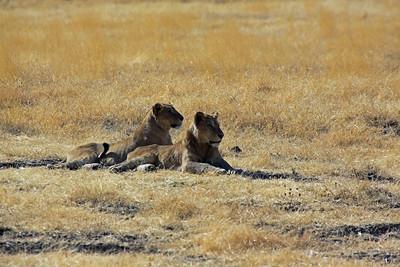 Ngorongoro Crater - close friends