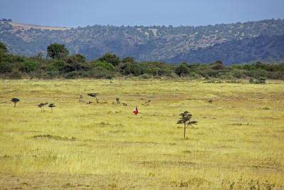 East Serengeti - Maasai commute