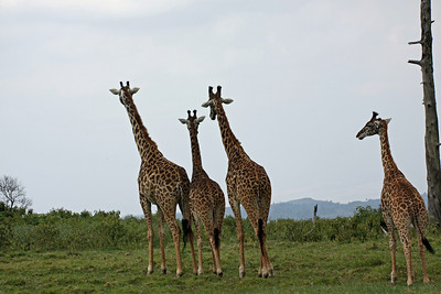 Arusha National Park - Everyone is going to tip over...